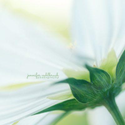 Diaphanous - Jennifer Vahlbruch