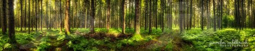 Endless Trees - Jennifer Vahlbruch