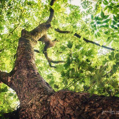Foliage Crowning - Jennifer Vahlbruch